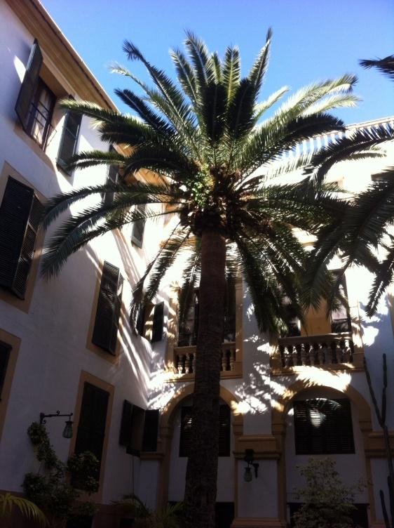 Photograph of Born Hotel palm. Majorca