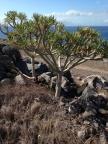 Cactus tree