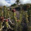Cactus in landscape